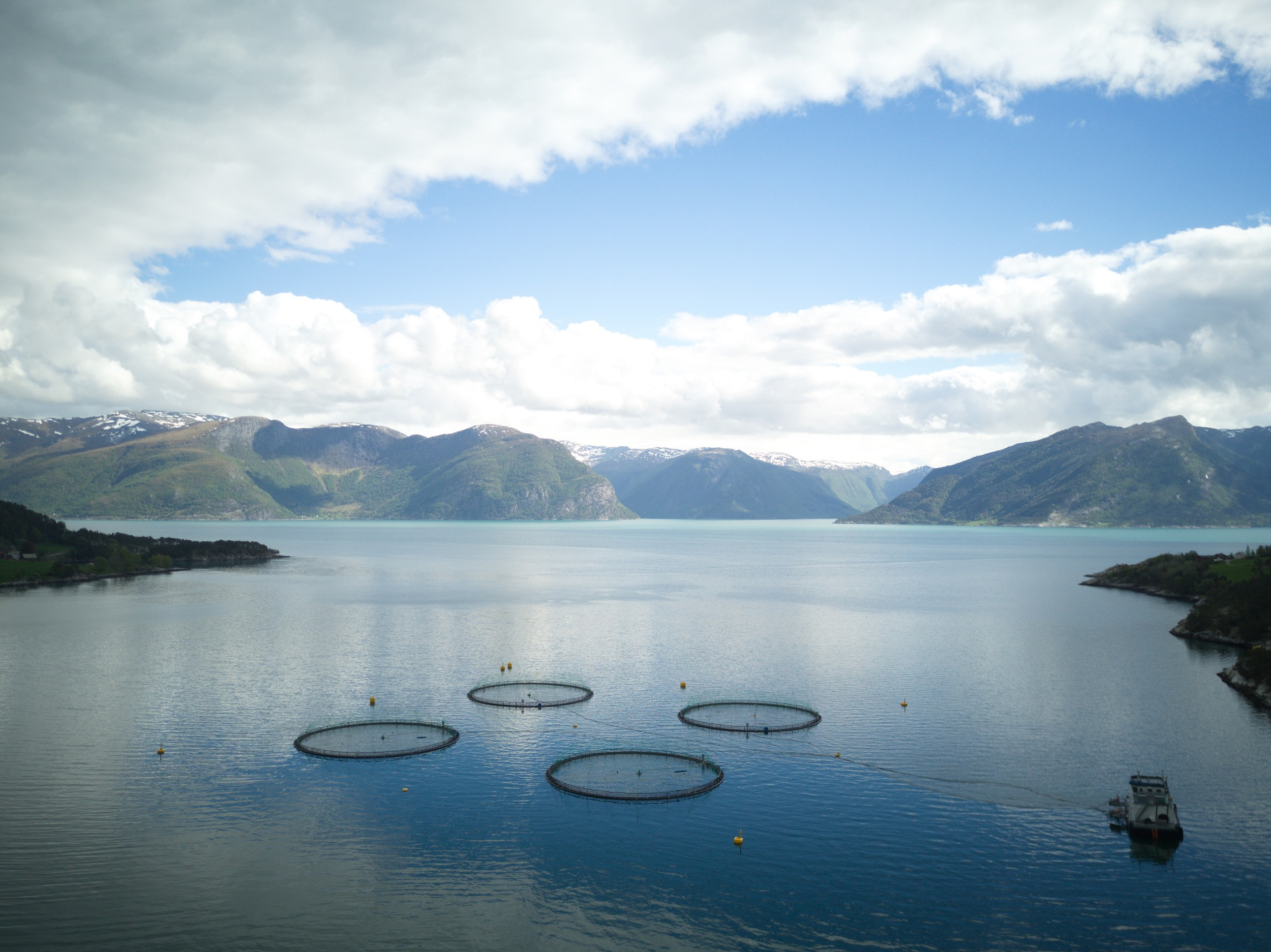 The new partnership between Atea, IBM, and Sjømatbedriftene will bring several seafood producers together to begin using blockchain (credit: Sjømatbedriftene)